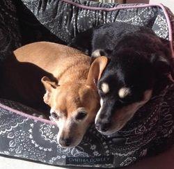 Layla and Baxter FKA Bubble