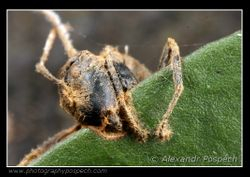 Ant parasited by fungus 3