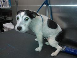JRT shave