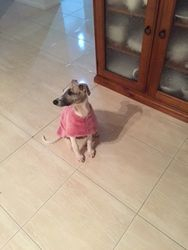 In her new jacket made by Lyndel