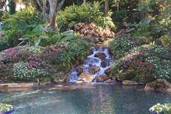 Gardens - Seaworld, Orlando FL