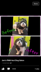 Grooming-Before and After