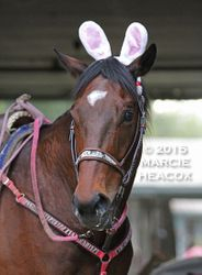 Easter Pony