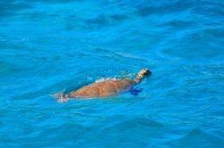 Karibik Segeltoern
