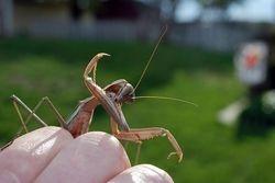 Mantis wash time