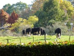 Autumn View Pony Tales Parties