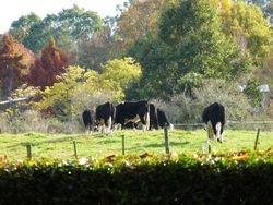 Autumn View Pony Tales Parties