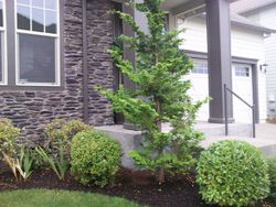 Hillsboro landscaping   landscaping services in Hillsboro