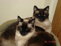 Sinbad & Zoie
