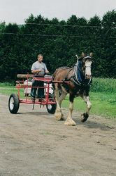 New Fore-Cart! 06/09