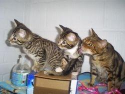 Fleur & kittens