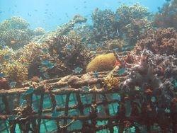 25. Fishstructure 2
