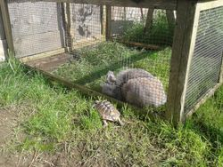 Wotsit and Pan the Tortoise