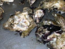 OYSTERS,SOUTH AFRICA