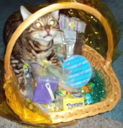 HAPPY EASTER TO ME! ~ I FOUND MY TREATS!