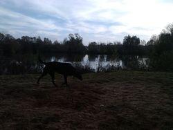 West Stow lake behind me