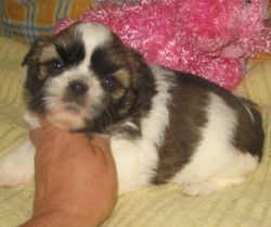 Another little Sweetie Girl #2