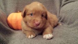 Tarius (Tan boy) 4 weeks