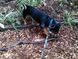Found me a big old stick