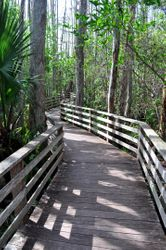 Corkscrew Boardwalk 1