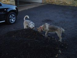 """""""Did you dig that"""" or me"""