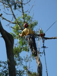 power pole chainsaw so not to have to climb higher on smaller less stable wood
