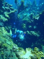 John diving in the Fowl Cay marine park