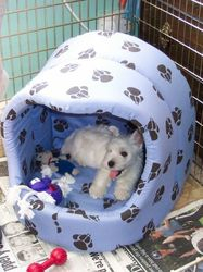 Pepsi in his bed