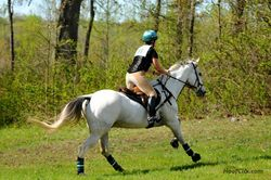 Galloping on course at FENCE HT