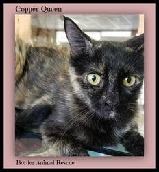 Cooper Queen