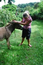 Louise with one of the Belmont donkeys