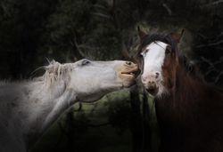 Horse Bites 2