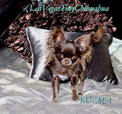 Kuzma my tiny male 2.10 lbs.