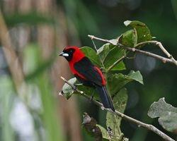 Day 3 Rio Pacaya / Pacaya-Samiria Reserve