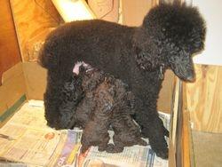4 weeks old.