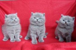 Kittens Feline x Kerel 2011