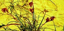 Fauna yellow