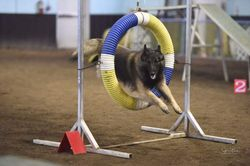 Agility - National Specialty 2019