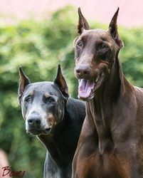 Doug & Athena