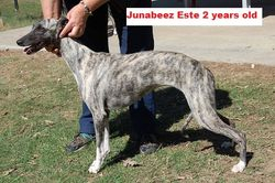 (Muffy)  Junabeez Estee - at 2 years old