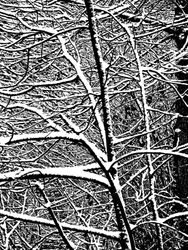 SNOW BRANCH WEB