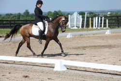 Dune - Our Awesome Lesson Pony