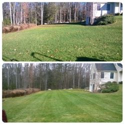 Lawn Before and Lawn After Service
