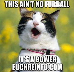 This aint no furball its a bower.