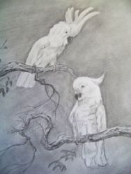 Birds at rest