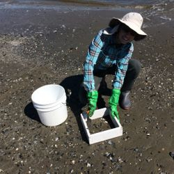 Collecting beach wrack-line samples