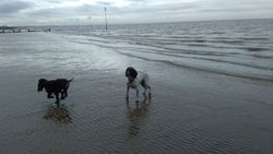 Holly-Belle and I enjoy Hunstanton
