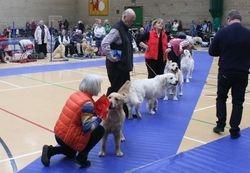 Puppy Dog Lineup