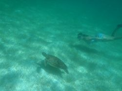 Swimming with turtles :-)