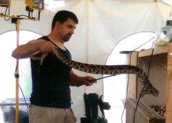 Mark and eastern diamondback rattler